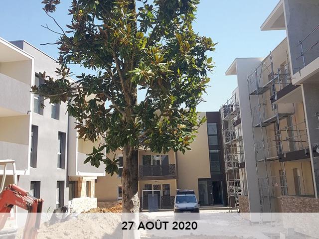CORIM-coustaude-arbre-2-20-08-272