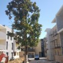 27 Août 2020, plantation des 1ers arbres sur le cœur d'ilot paysager de la résidence DOMAINE DE LA COUSTAUDE